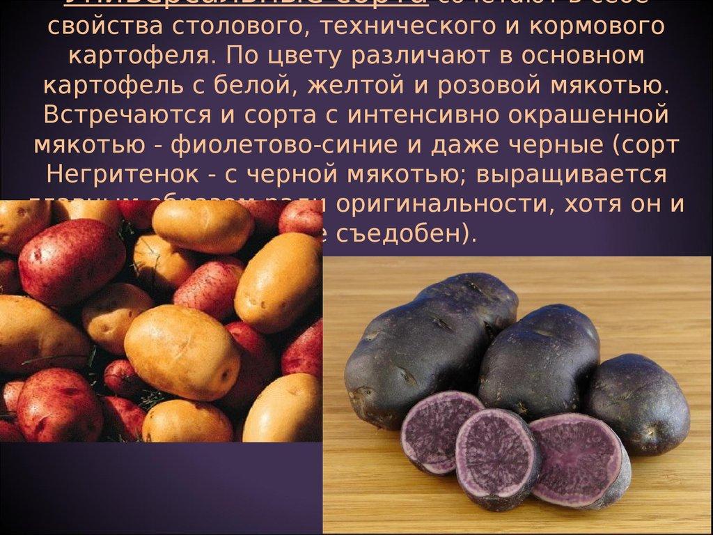 """Картофель """"черный принц"""": описание сорта, характеристики корнеплода, рекомендации по уходу и выращиванию, а так же фото-материалы русский фермер"""
