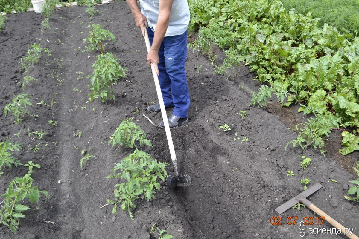 Технология выращивания картофеля в мешках: пошаговая инструкция, советы
