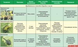 Эстроз овец: лечение, симптомы, профилактика, статьи nita-farm