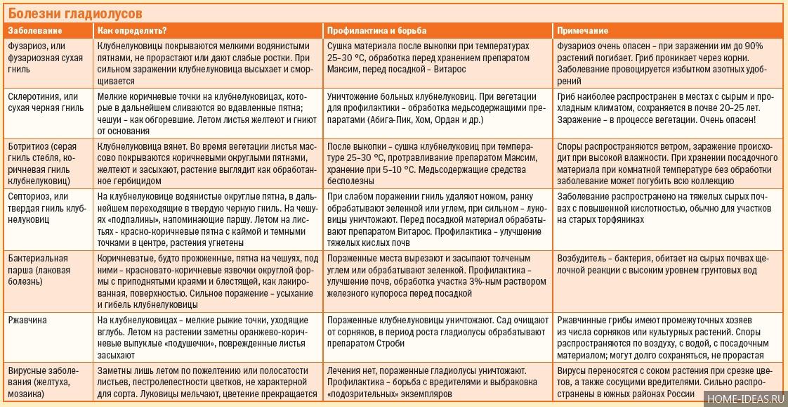 Болезни гладиолусов: признаки, причины и методы лечения