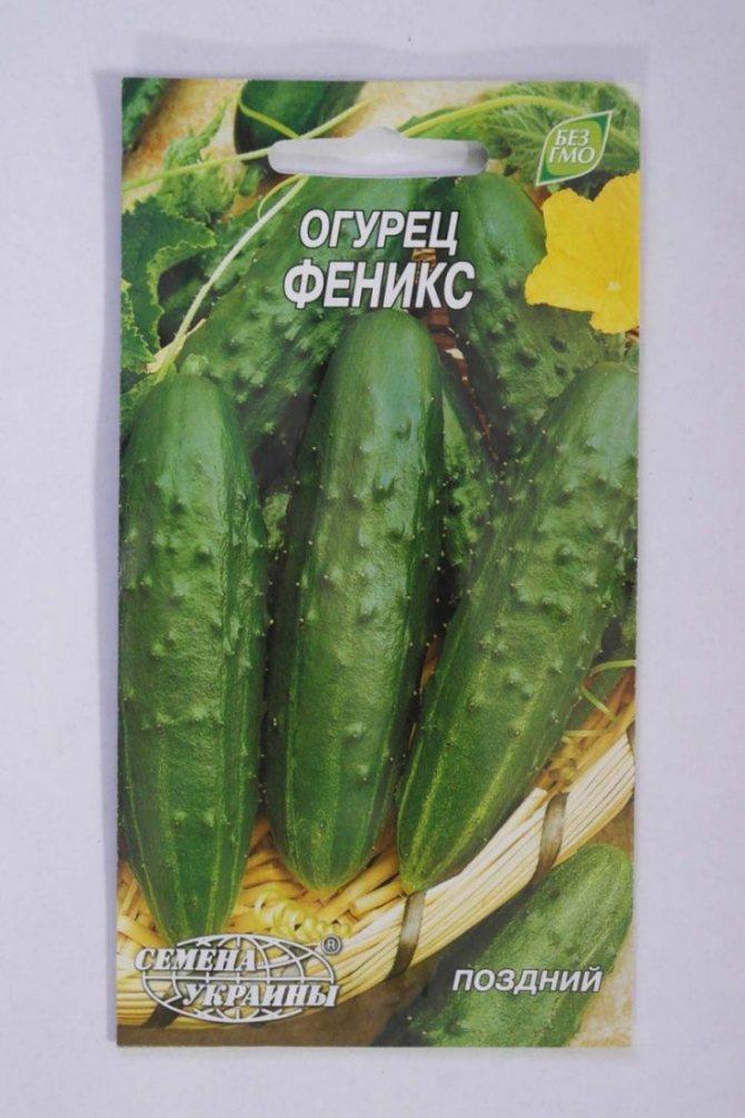 Огурцы феникс: описание, выращивание, уход, фото