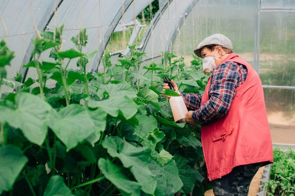 Как применять «энерген» для семян и для рассады - домоводство  - медиаплатформа миртесен