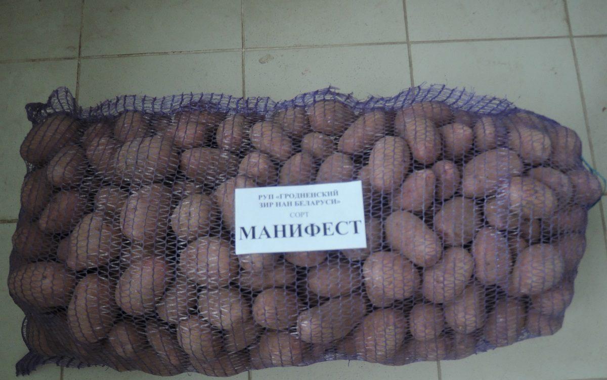 Картофель манифест: описание и характеристика сорта, посадка и уход, борьба с вредителями