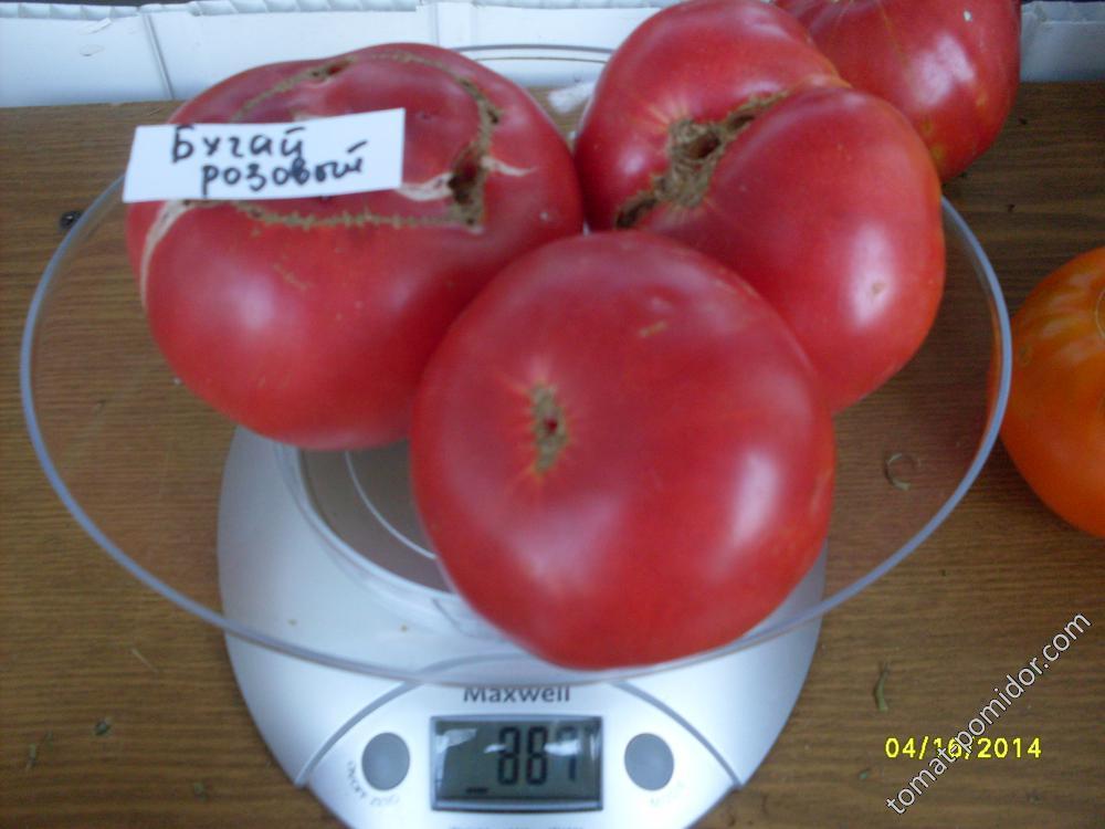 Томат бугай красный: отзывы об урожайности и фото семян помидоров от фирмы сибирский сад, описание и характеристики сорта