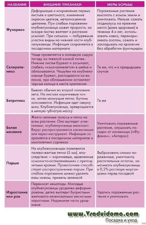 Лечение болезней и борьба с вредителями гладиолусов, фото