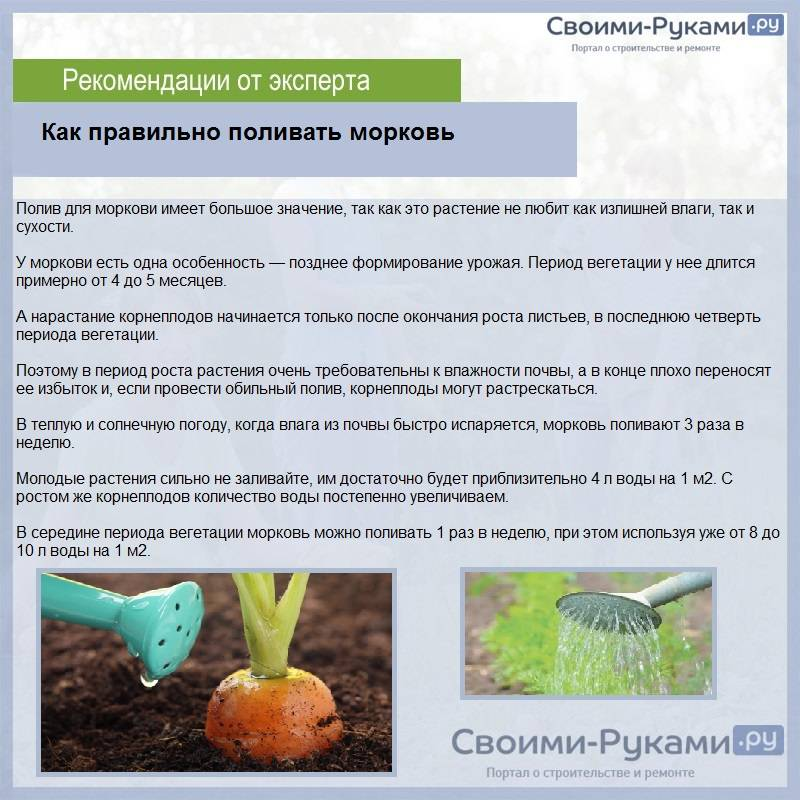 Когда и как правильно поливать капусту на грядке?