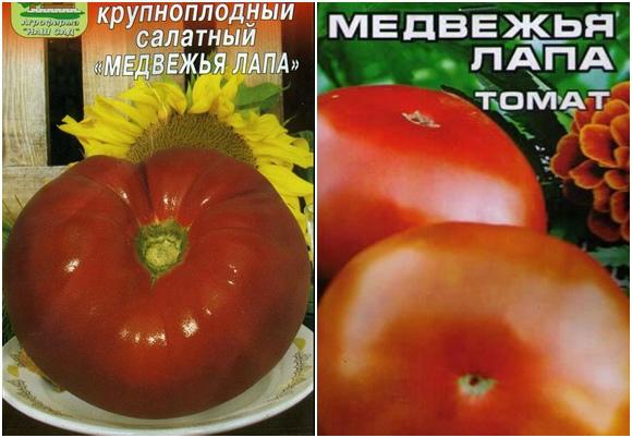 Томат медвежий коготь: фото помидоров, отзывы об урожайности, описание и характеристика сорта