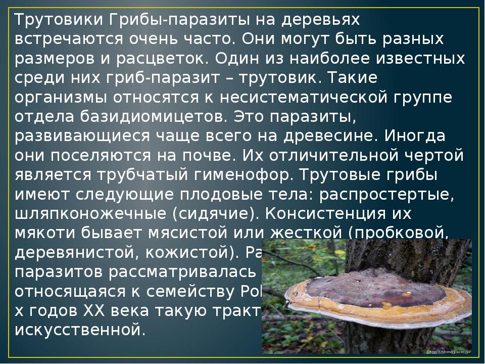 Съедобные древесные грибы трутовики: фото, видео, названия, описание внешнего вида, польза плодовых тел, лечебные свойства