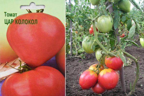 Томат царь колокол: описание сорта, его характеристика и фото русский фермер