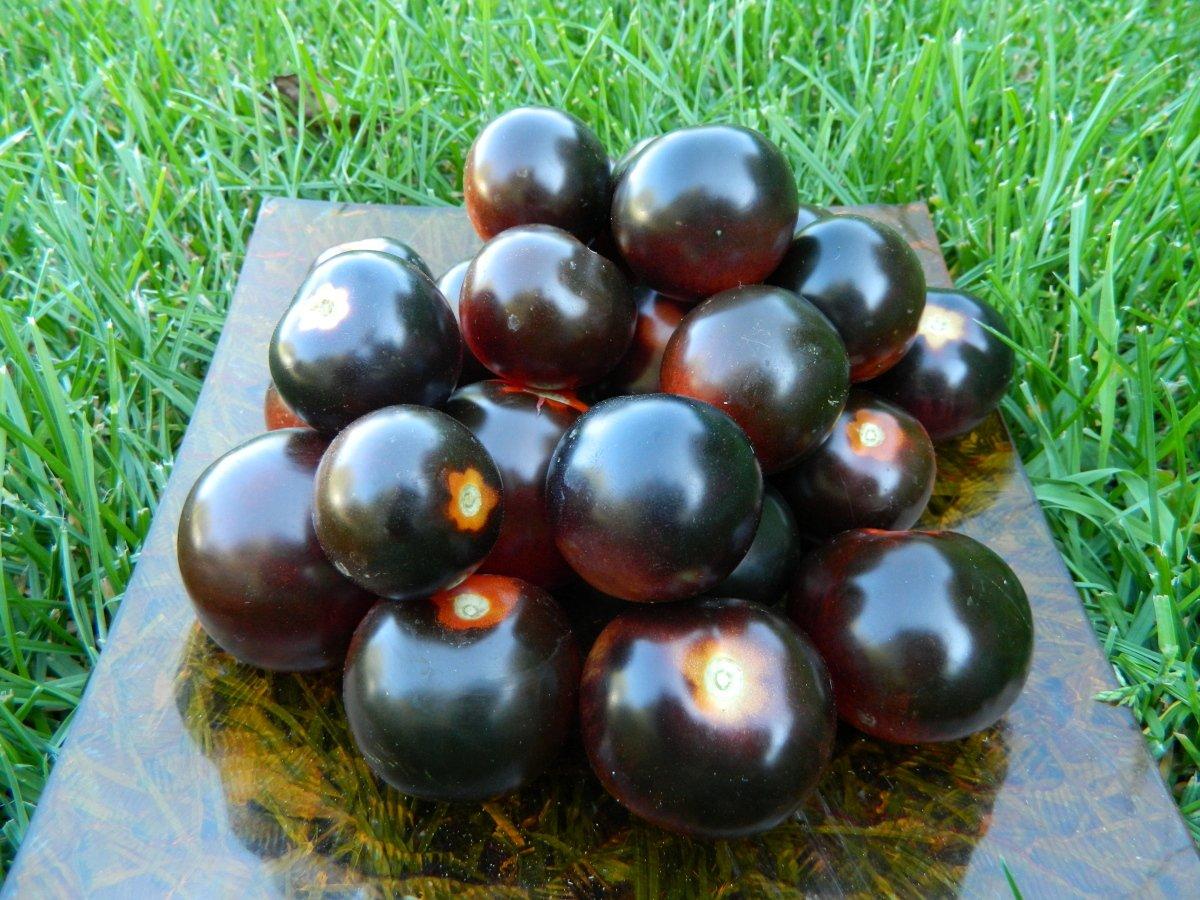 Томат черная гроздь: описание и урожайность сорта, фото, отзывы
