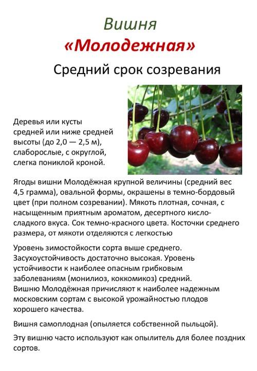 12 лучших сортов вишни: для средней полосы, самоплодные для нижегородской области, самоопыляемые для татарстана, сладкие для самарской