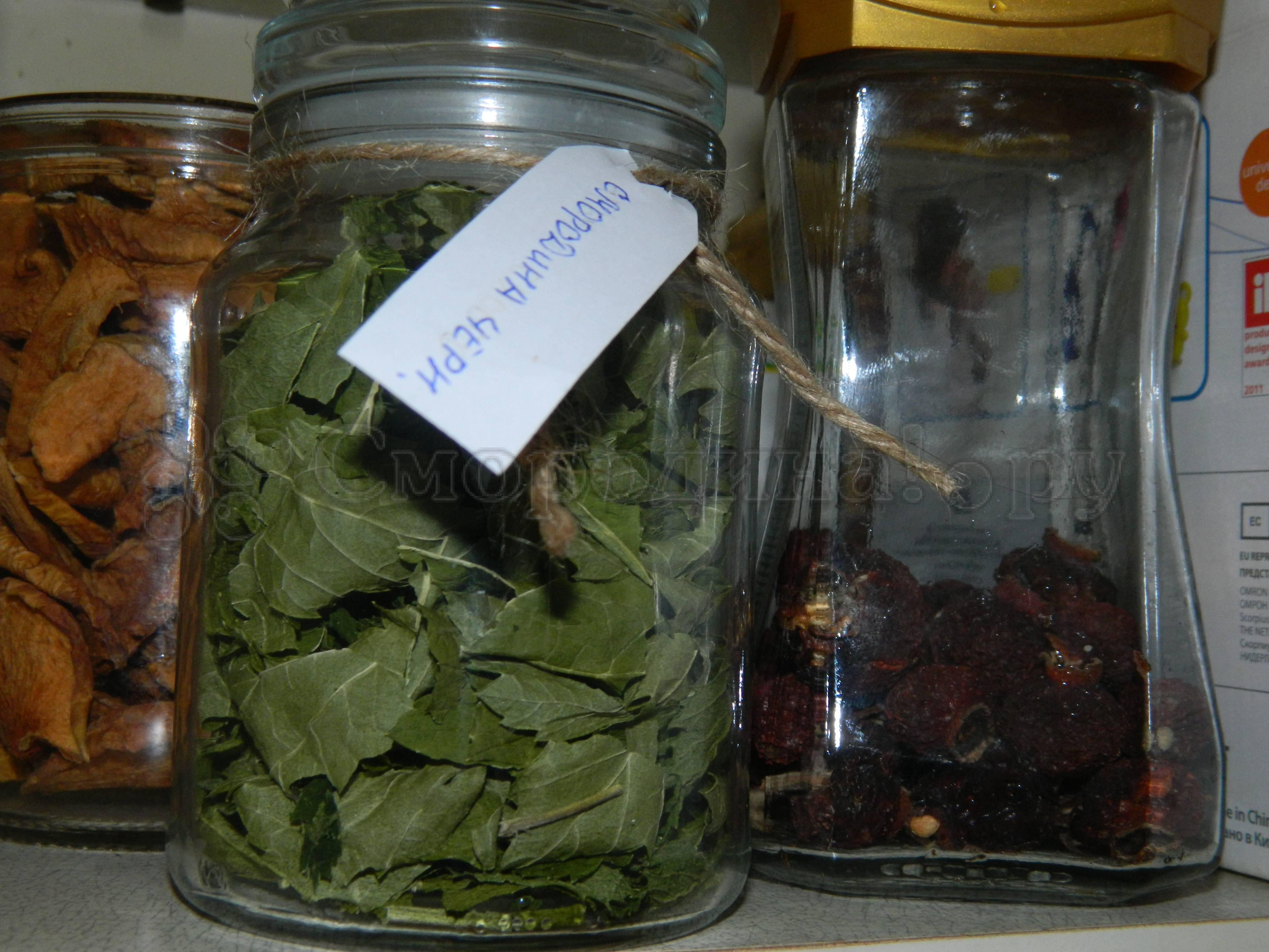 Листья смородины - полезные свойства и противопоказания  