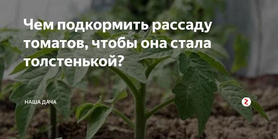 Чем подкормить рассаду помидор чтобы были толстенькие стебли для роста народные средства видео