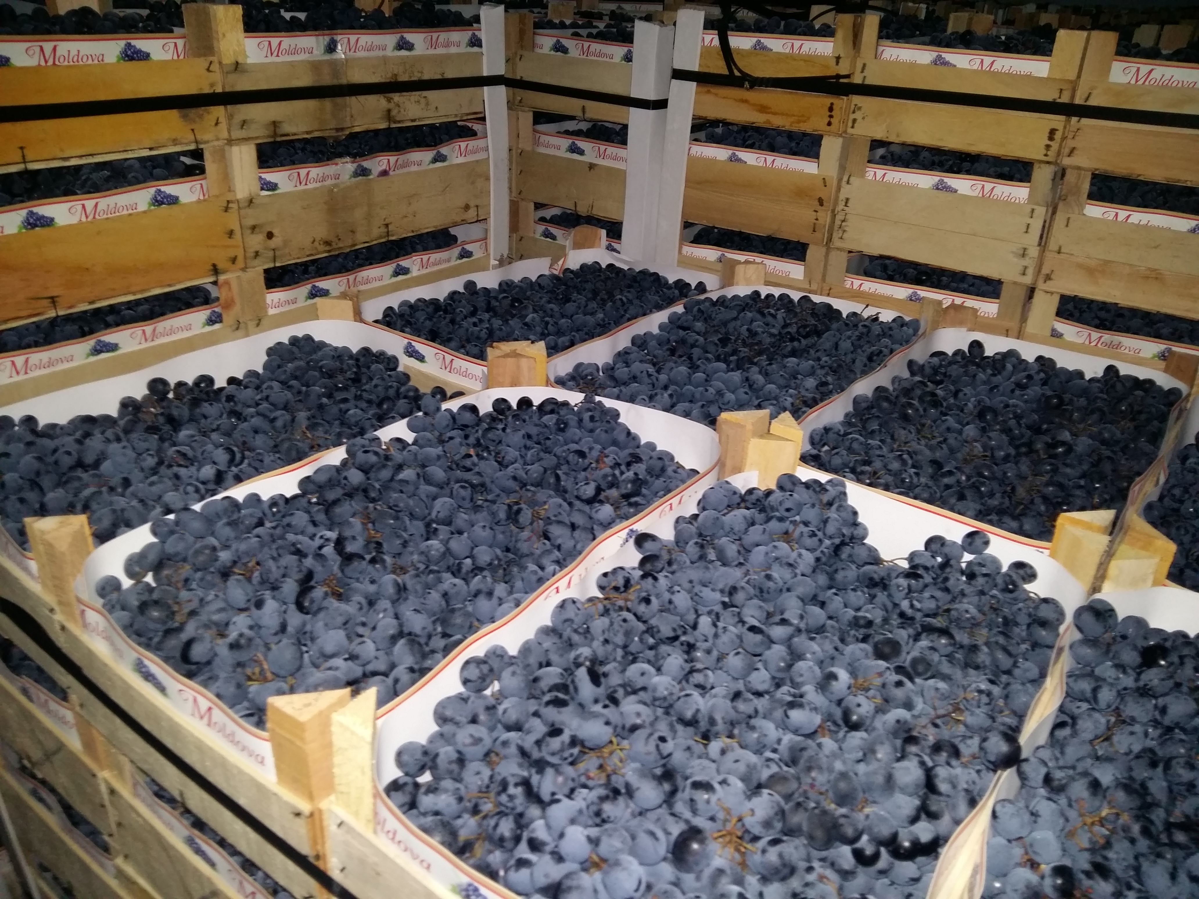 Как хранить виноград в домашних условиях: где сохранить на зиму, при какой температуре, сколько хранится