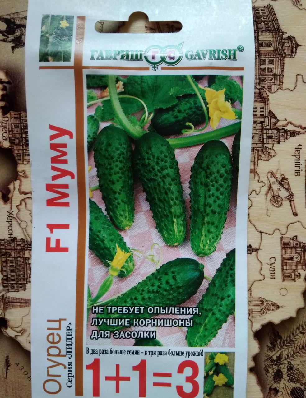 Описание огурцов сорта муму f1, выращивание и уход за гибридом. описание сорта огурцов муму, особенности выращивания и ухода