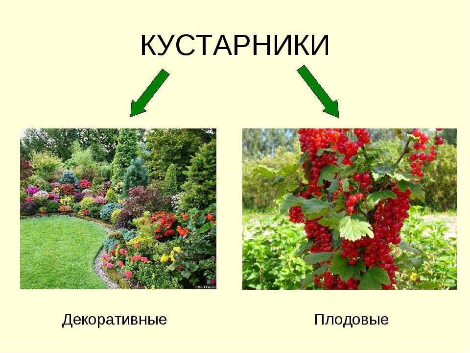 Декоративные деревья и кусты для дизайна сада