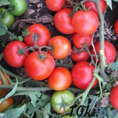 Томаты асвон: описание сорта и особенностей его выращивания