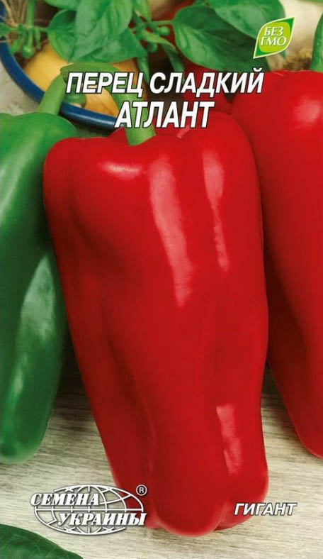 Перец атлант: характеристика и описание сорта с фото, отзывы о семенах и урожае