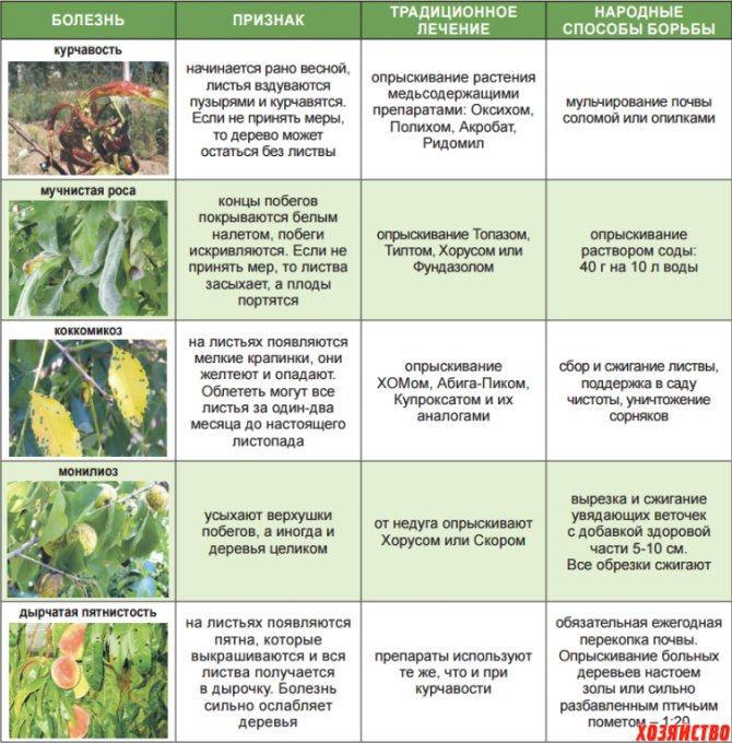 Выращивание кабачков в теплице: как получить высокий урожай? русский фермер