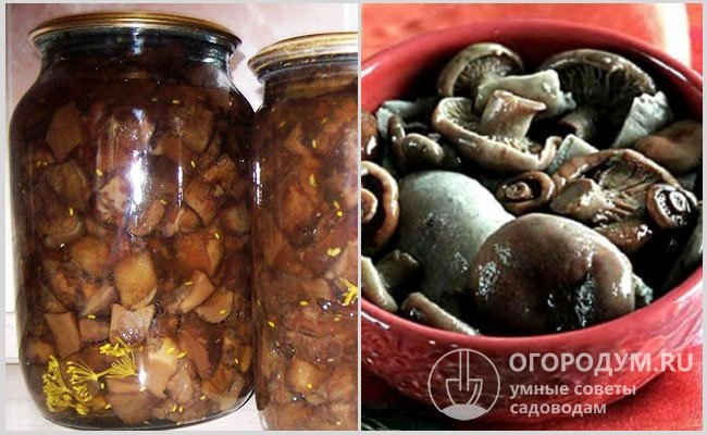Как приготовить грибы коровьи губы. как солить свинушки горячим способом