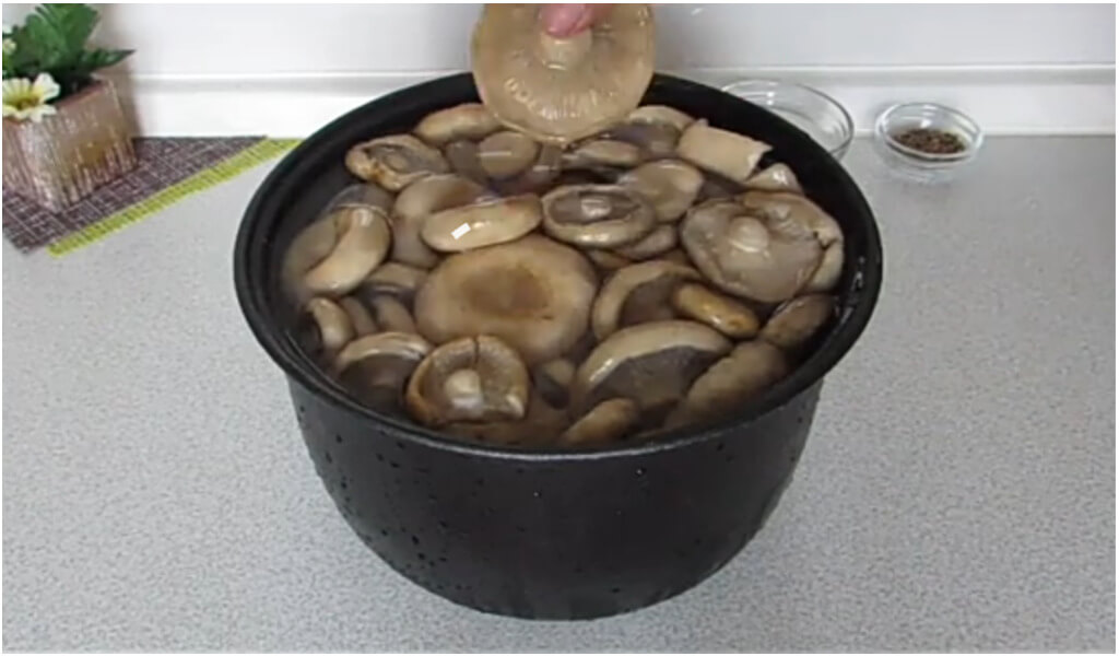 Можно ли замораживать соленые грузди на зиму. можно ли замораживать соленые грибы