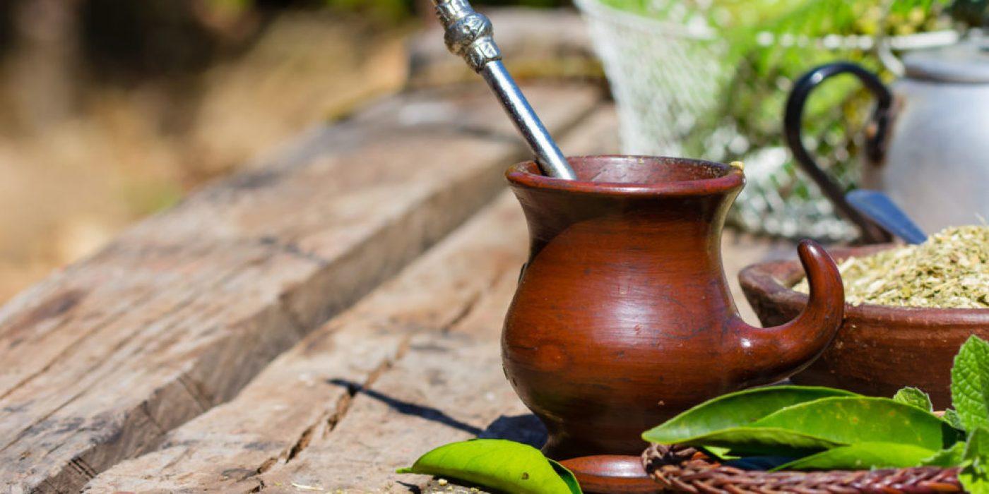 Падуб парагвайский (чай мате): полезные свойства, особенности приготовления и употребления