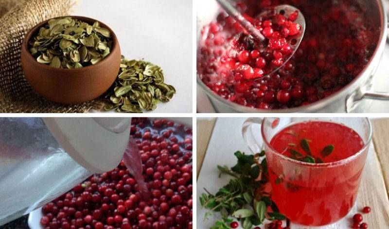 Лечебные свойства листьев и ягод брусники — floraprice.ru