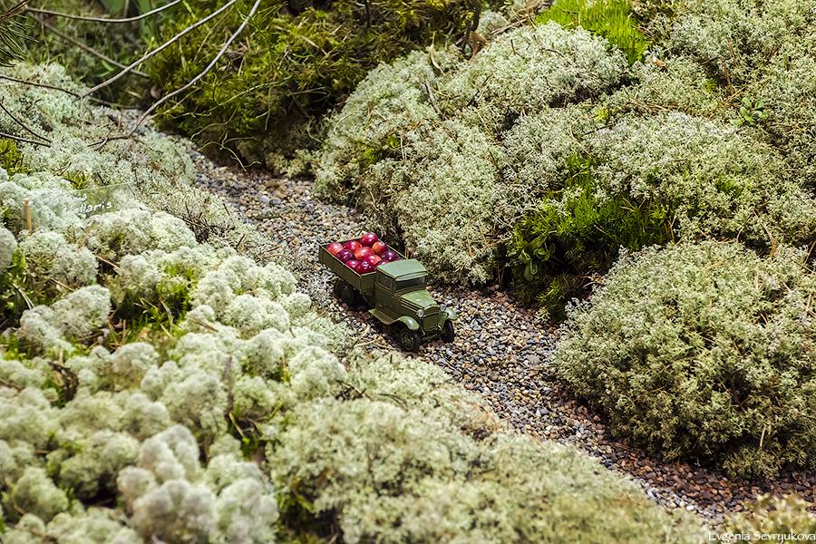 Садовый мох (50 фото): декоративный цветущий и другие разновидности для ландшафтного дизайна, посадка мха на даче и примеры ландшафта
