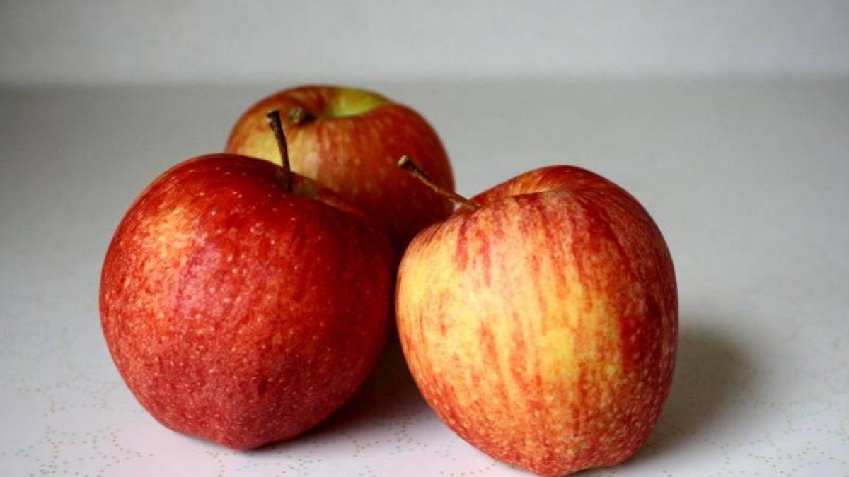 Сорт яблок «гала»: характеристика, плюсы и минусы