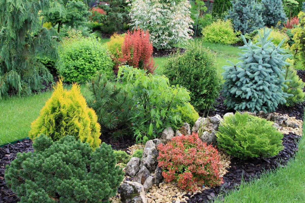 Хвойные растения: классы, виды хвойных деревьев