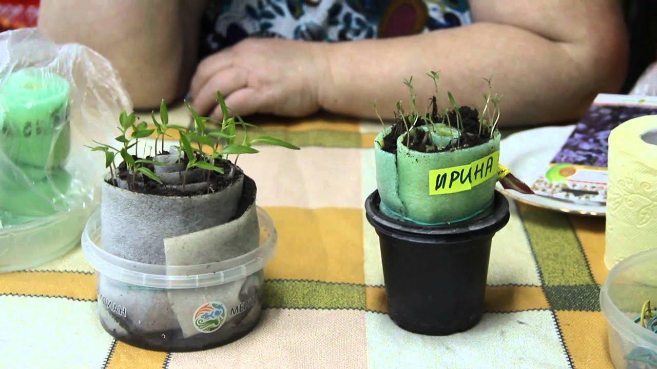 Посев томатов в улитку по методу юлии миняевой