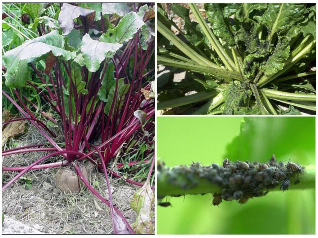 Борьба с вредителями растений народными средствами: рецепты настоев и отваров для опрыскивания культур