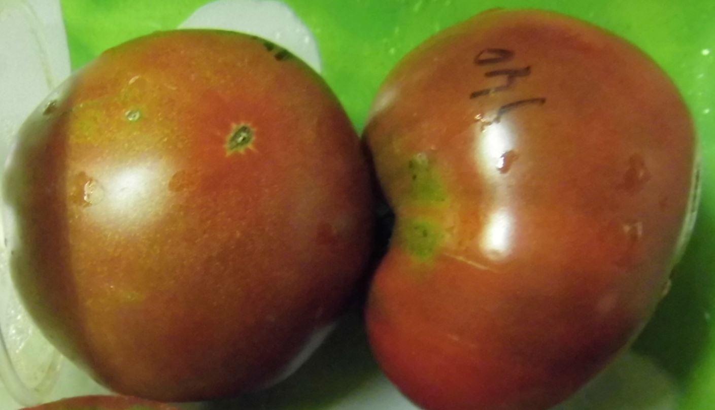 Томат заржавевшее сердце эверетта: описание сорта, отзывы, фото, урожайность   tomatland.ru