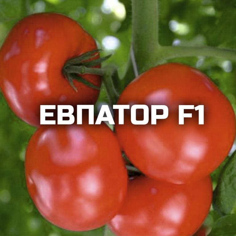Характеристика и описание гибрида томатов «евпатор f1»
