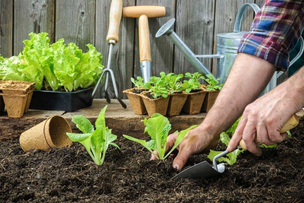 Как правильно посадить картофель, чтобы гарантированно получить хороший урожай