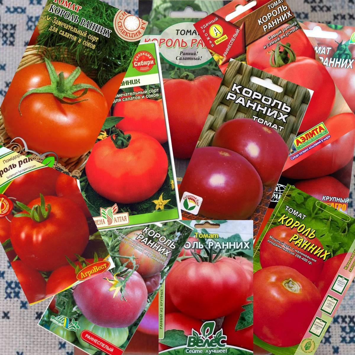 Урожайные сорта томатов для открытого грунта: крупноплодные, ранние, вкусные