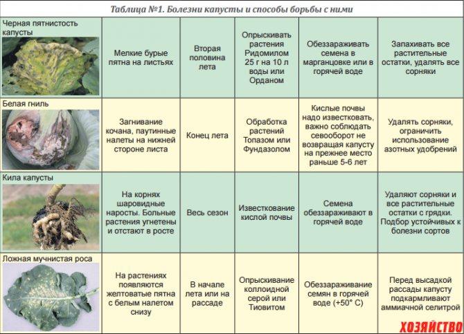 Болезни и вредители черной смородины, в том числе лечение и восстановление растений, а также сорта, устойчивые к заболеваниям, с описанием, характеристикой и отзывами