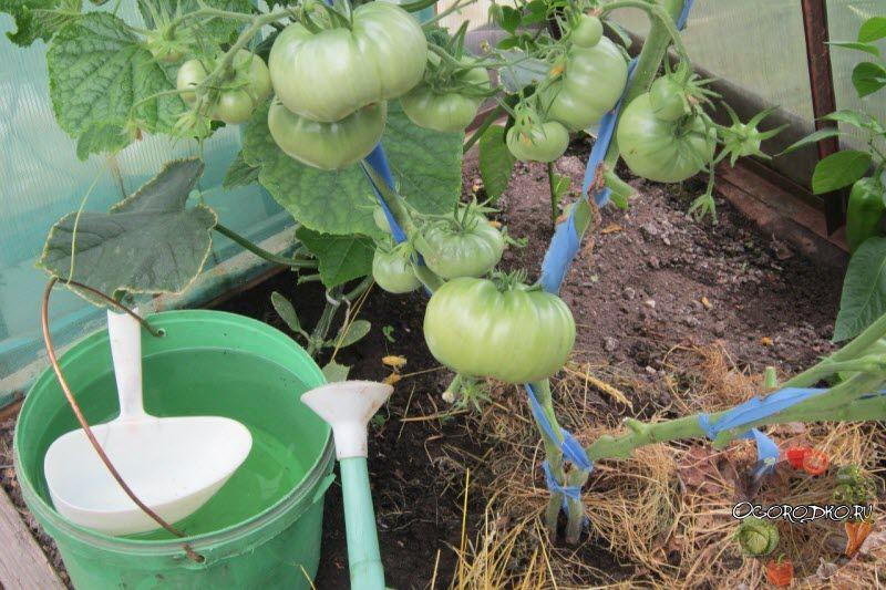 Подкормка растений в период плодоношения: какие нужно удобрять, как?