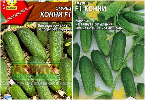 Огурец бинго f1: описание корнишонного сорта, отзывы и фото огородников, выращивание в открытом грунте и теплице