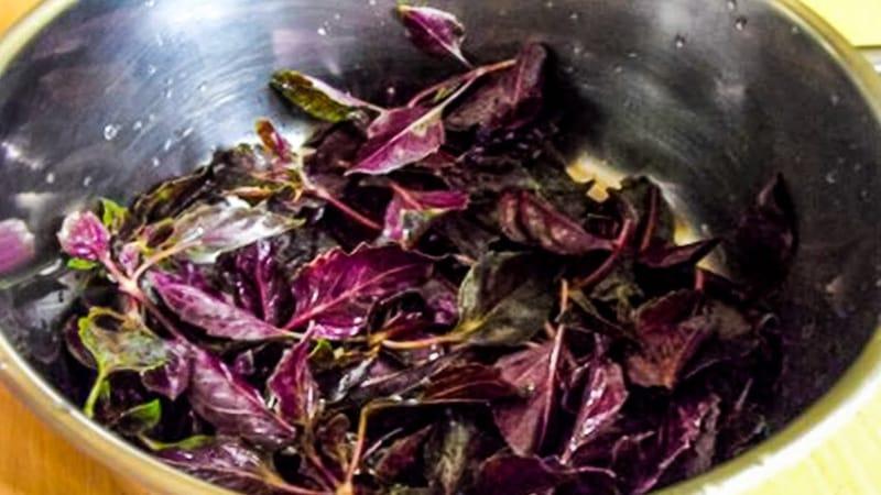 Базилик фиолетовый: сорта, лечебные свойства и противопоказания, применение, чем полезен для организма, фото