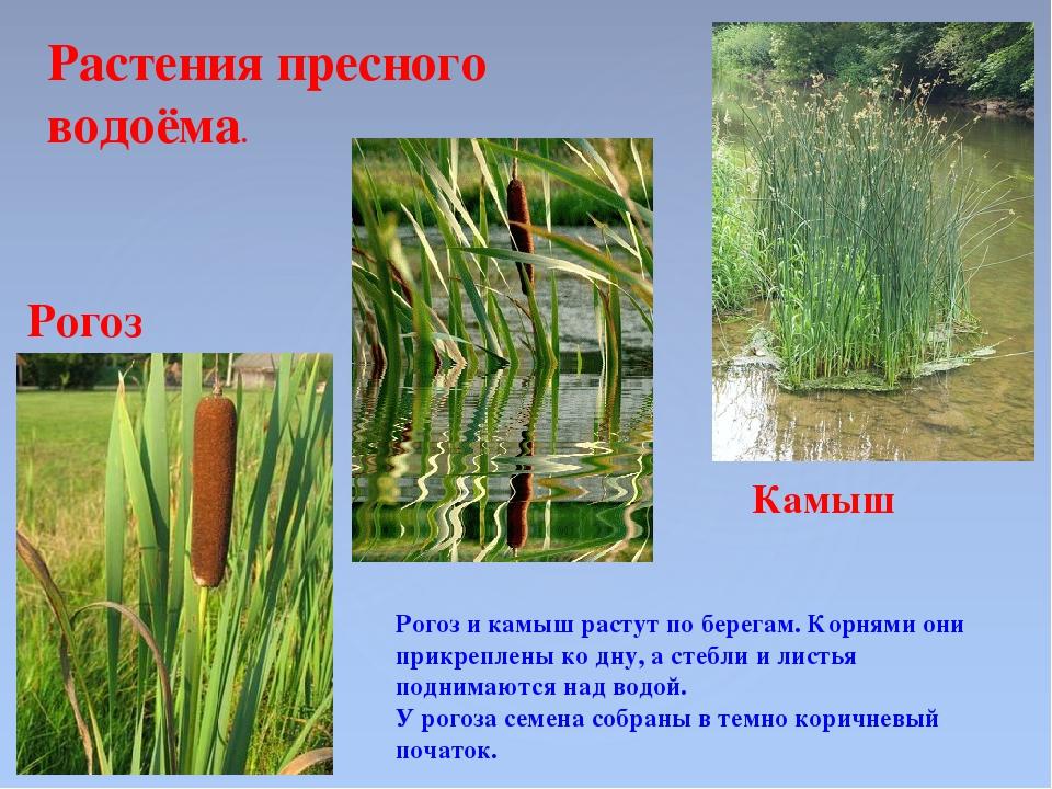 Особенности выбора растений для пруда, правила создания оформления берегов и прилегающих к ним зон