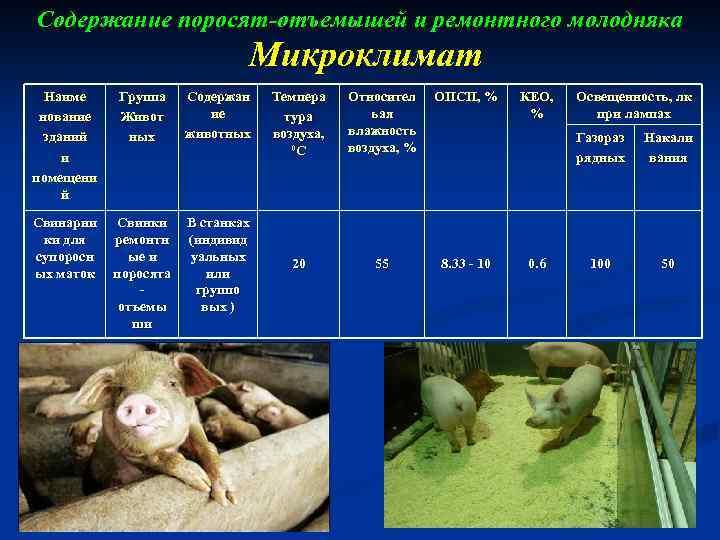 Читать книгу выращивание свиней в домашних условиях. уход и откорм николая демидова : онлайн чтение - страница 1