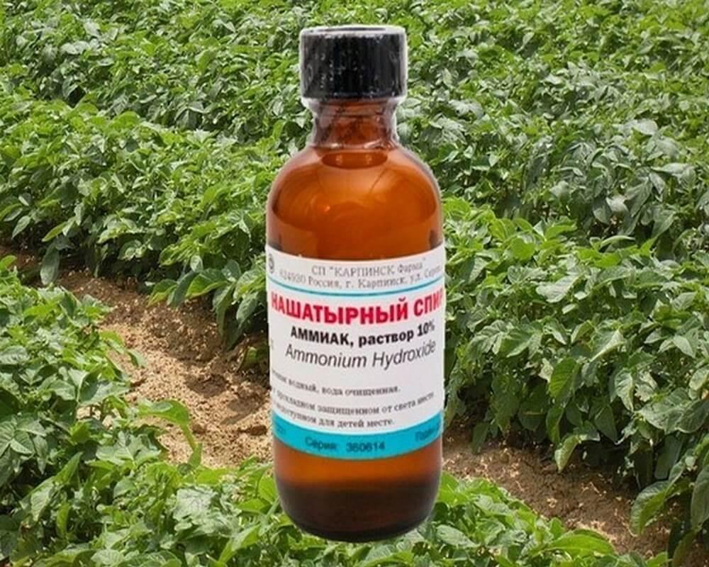Применение нашатырного спирта для растений