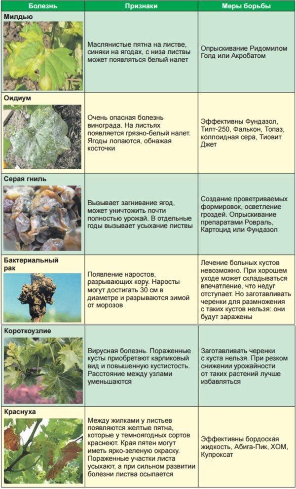 Болезни и вредители красной смородины на supersadovnik.ru