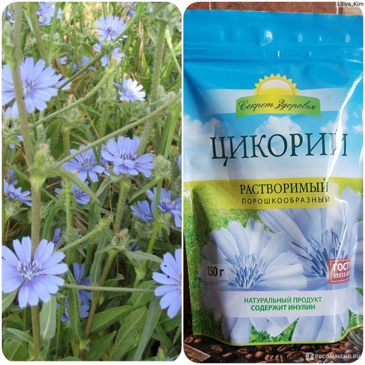 Полезные свойства и противопоказания цикория, от чего помогает цветок и как принимать