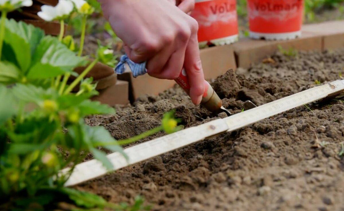 Особенности выращивания и размножения хрена, посадка, уход