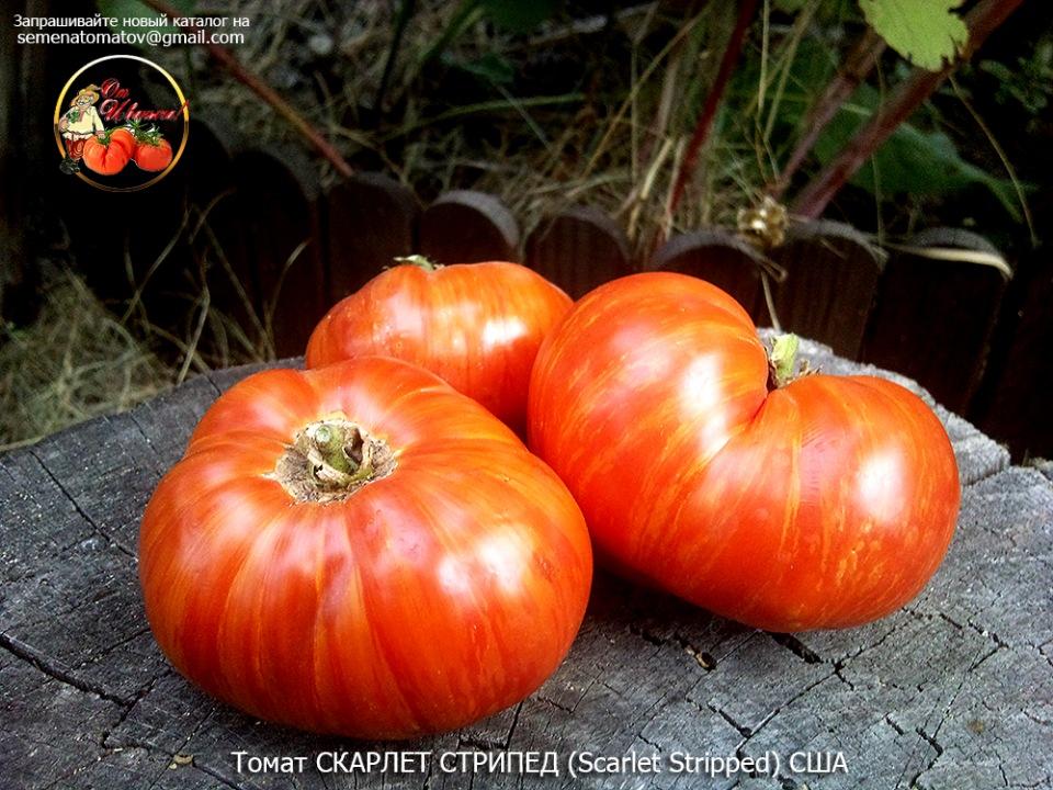 Томат малахитовая шкатулка: характеристика и описание сорта, урожайность с фото и видео – дачные дела