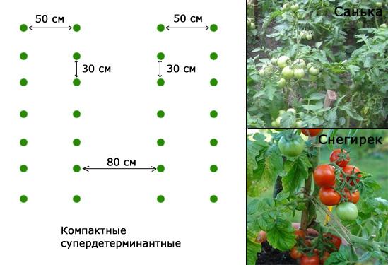 На каком расстоянии высаживать помидоры в теплице и открытом грунте: схемы посадки