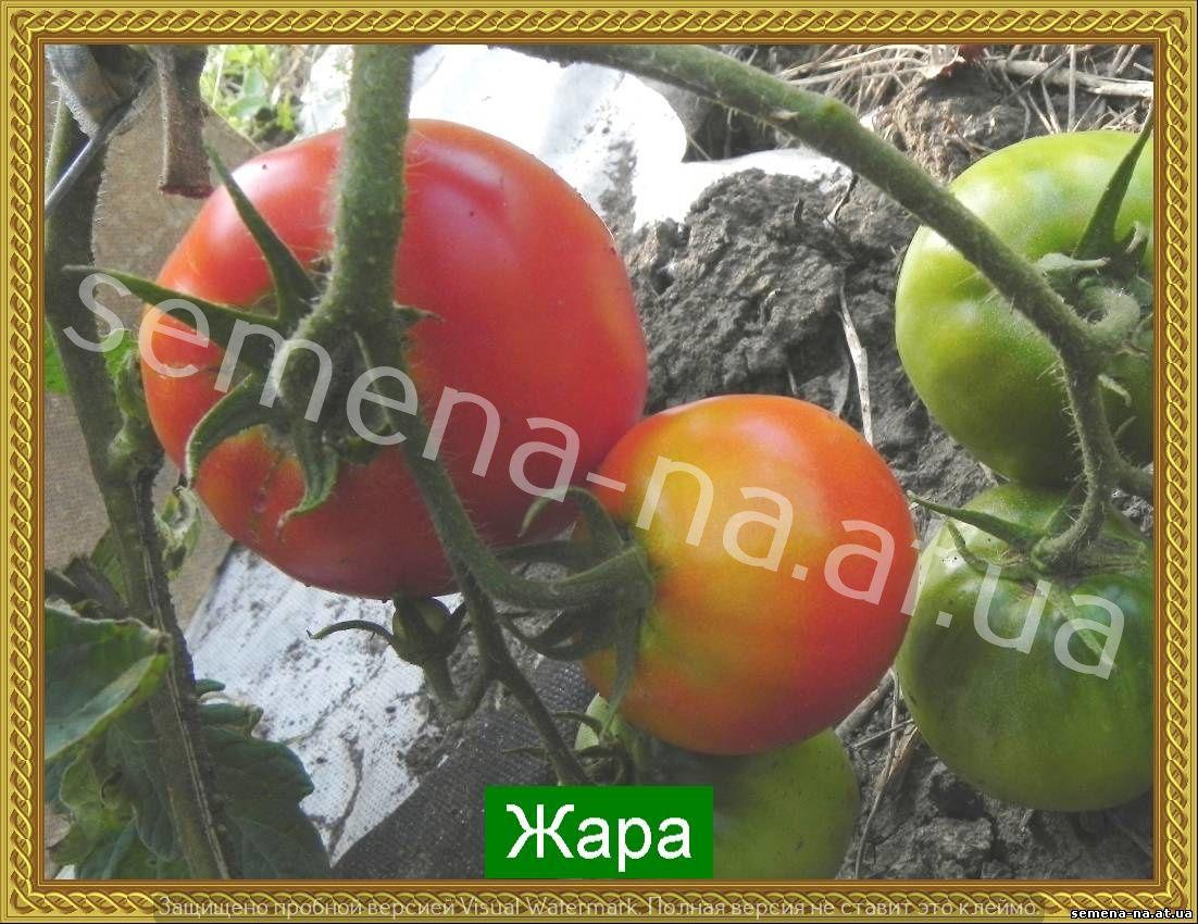 Оригинальный сорт с фруктовым вкусом — томат красный уголь: характеристика и описание