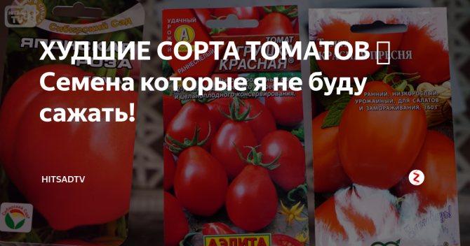 Великолепный томат «сенсей» — описание сорта, характеристика и фото